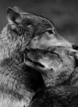lovely wolfs